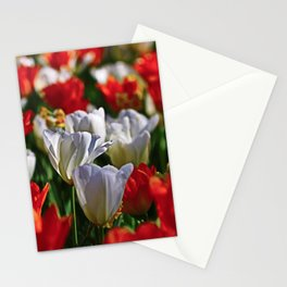 Hello Spring! Bright Orange and White Tulips and Narcissi in the Sun Stationery Cards