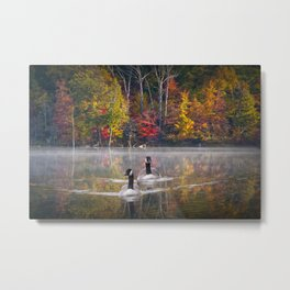 Two Canada Geese swimming in Fall Metal Print