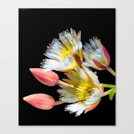 Bold and Wild Flowers Canvas Print