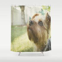 terrier Shower Curtains featuring Yorkshire Terrier by coffeeandtartan