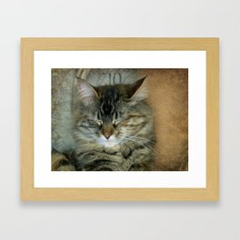 Bob Framed Art Print