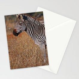 Zebra in the sunlight, Africa wildlife Stationery Cards