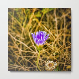 Purple Desert Bloom Metal Print