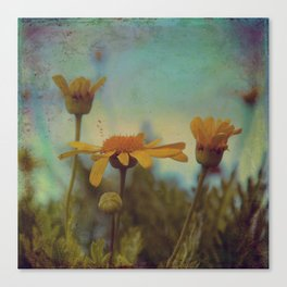 The beauty of simple things Canvas Print