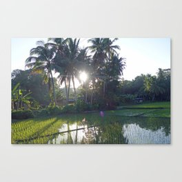 Philippine Rice Fields Canvas Print
