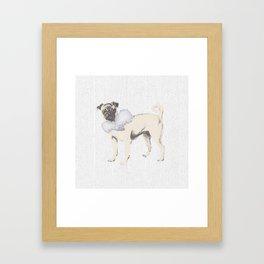 Pug in a Ruff Framed Art Print