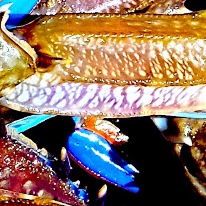 bright Blue swimmer crabs, Whyalla, South Australia Leggings