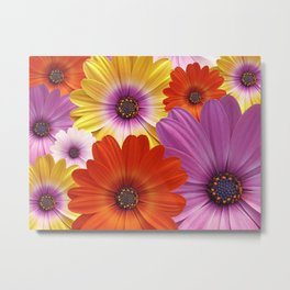 Colorful Medley of African Daisies Metal Print