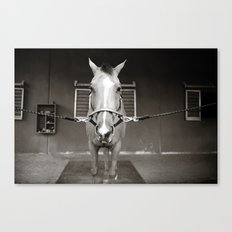 Horsin' around Canvas Print
