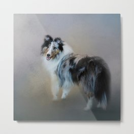 Did You Call Me - Blue Merle Shetland Sheepdog Metal Print