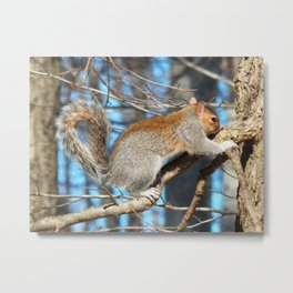 Itchy nose Metal Print