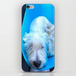 Dog2 iPhone Skin