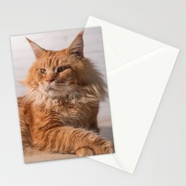 Purebred red Maine Coon cat lying on the floor at home Stationery Cards