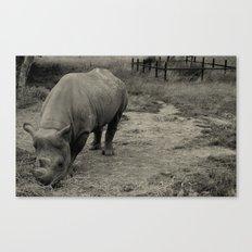 Black Rhino (B&W) Canvas Print