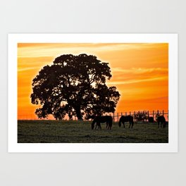 retreat at sunset Art Print
