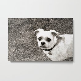Molly black and white Metal Print