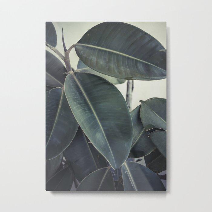 ficus nature II Metal Print