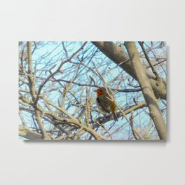 Singing robin Metal Print
