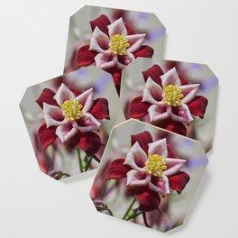 aquilegia flower in bloom in the garden Coaster
