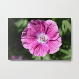 Pink summer flower blossom (Macro Close-Up) Metal Print