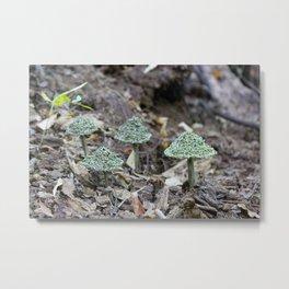 Pinus Taeda - Loblolly Pine Metal Print