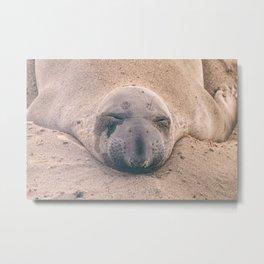 Sleeping Seal Metal Print