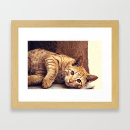 Cat roux Framed Art Print