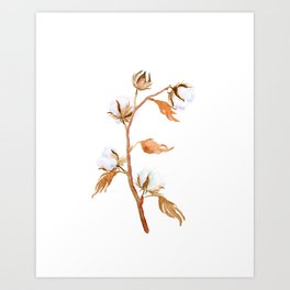 Watercolor Cotton Plant Cotton Boll Art Print