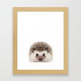 Baby Hedgehog Framed Art Print
