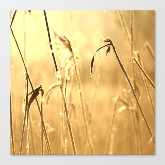 Foggy Morning With Golden Tones  Canvas Print