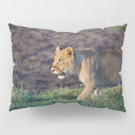 Lion cub in morning light Pillow Sham
