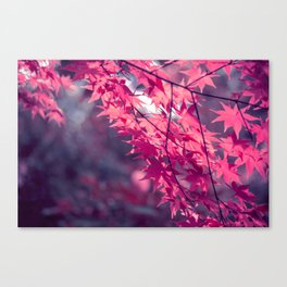 Autumn foliage in backlight Canvas Print