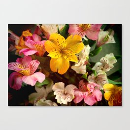Lily of the Incas Bouquet Canvas Print