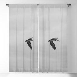 Pelican Flight Study Blackout Curtain