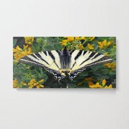 Scarce Swallowtail, Iphiclides Podalirius Metal Print