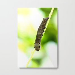 Caterpillar On A Green Plant #decor #society6 Metal Print