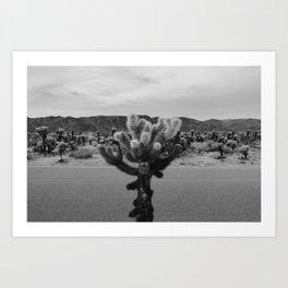 Cholla Cactus Garden XVII Art Print