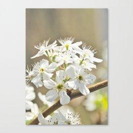 Floral 29 #flower #neutrals Canvas Print