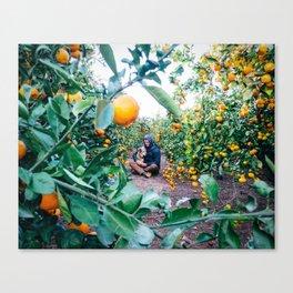 Valencian Orange Grove Canvas Print
