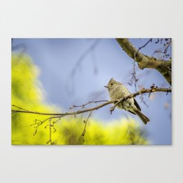 Spring time Bird, Nature Photography, Spring, Wall Art, Wall Hanging Canvas Print