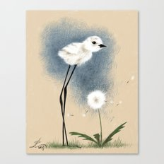 Snowy Stilted Plover Canvas Print