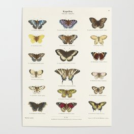 Vintage Butterfly Chart Poster