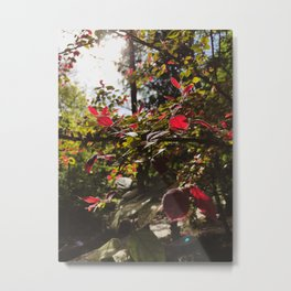 Flower 13 Metal Print