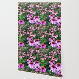 Coneflower Wallpaper