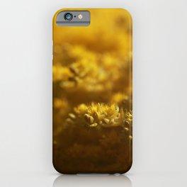 Sedum iPhone Case