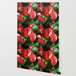 Red Flowers Anthurium Genus Wallpaper