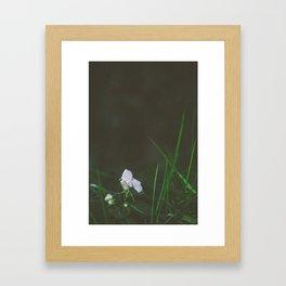 Lonely Flowers 02 Framed Art Print