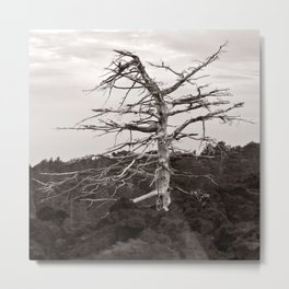 Dead Tree of the Volcano Etna Sicily Metal Print