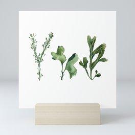 Trio of Green Seaweed Watercolor Mini Art Print