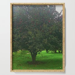 Apple Tree With Red Ripe Apples Serving Tray